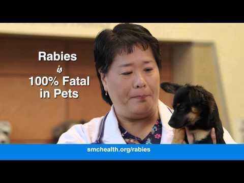 Animal Bites and Rabies