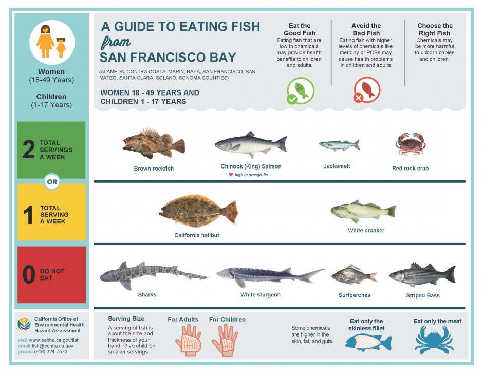 safetoeat fish from the san francisco bay  san mateo